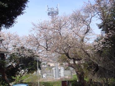 Sakura10^2